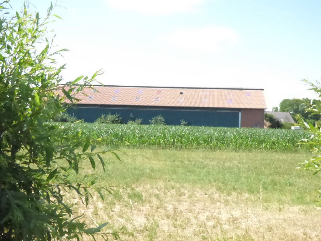 Landwirtschaftliche Fläche mit Stall in Hamminkeln: Neubau der Hofstelle!