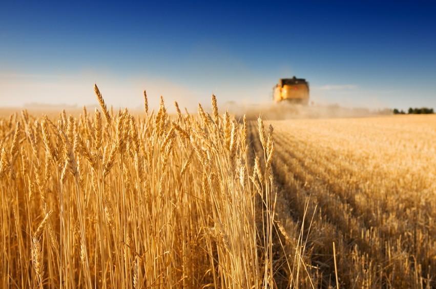 Landwirtschaftliche Fläche in Hamminkeln-Brünen gegen Höchstgebot zu verkaufen!